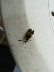 Bug [STOCK]