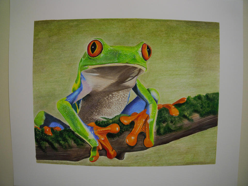 Disegni Rane Colorate: Red-Eyed Tree Frog Colored Pencil Drawing By