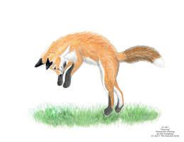 Pouncing fox by AlexKSFox