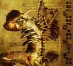 Bone Reconstruction