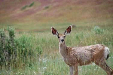 Deer in the headlights by leeleeemily