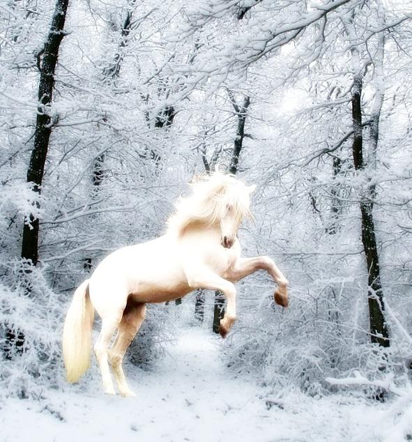 Epona White_Horse_by_Woelfchen1980