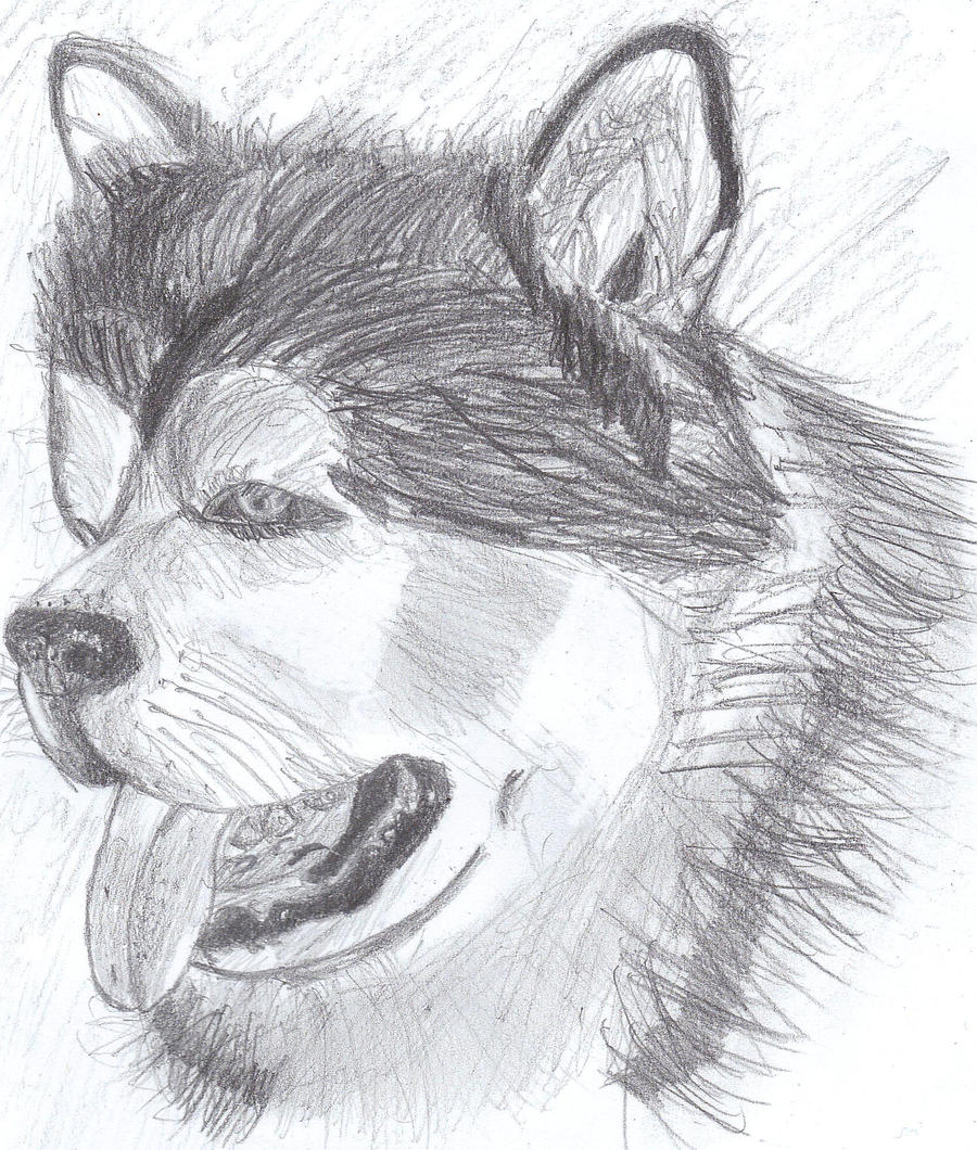 Realistic dog drawing: Alaskan Malamute Puppy by hapzy on ...