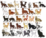 Every Warrior Cat - A by Velocira
