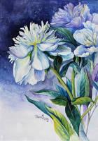 White peonies by vasoiko
