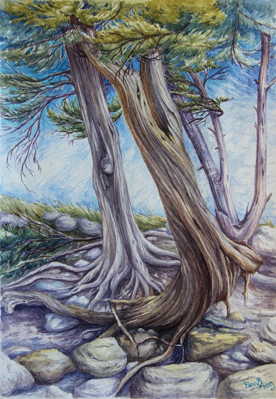 Striding pine by vasoiko