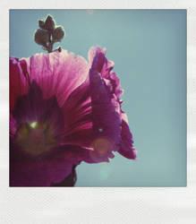 Flower by Poet168