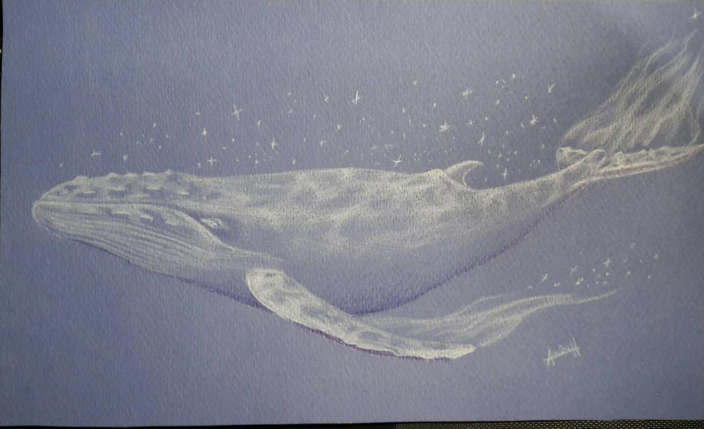whale by ciel mytsu on deviantart