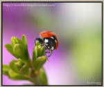 Lovely ladybird