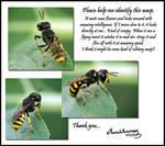 Wasp by Munchkinmay
