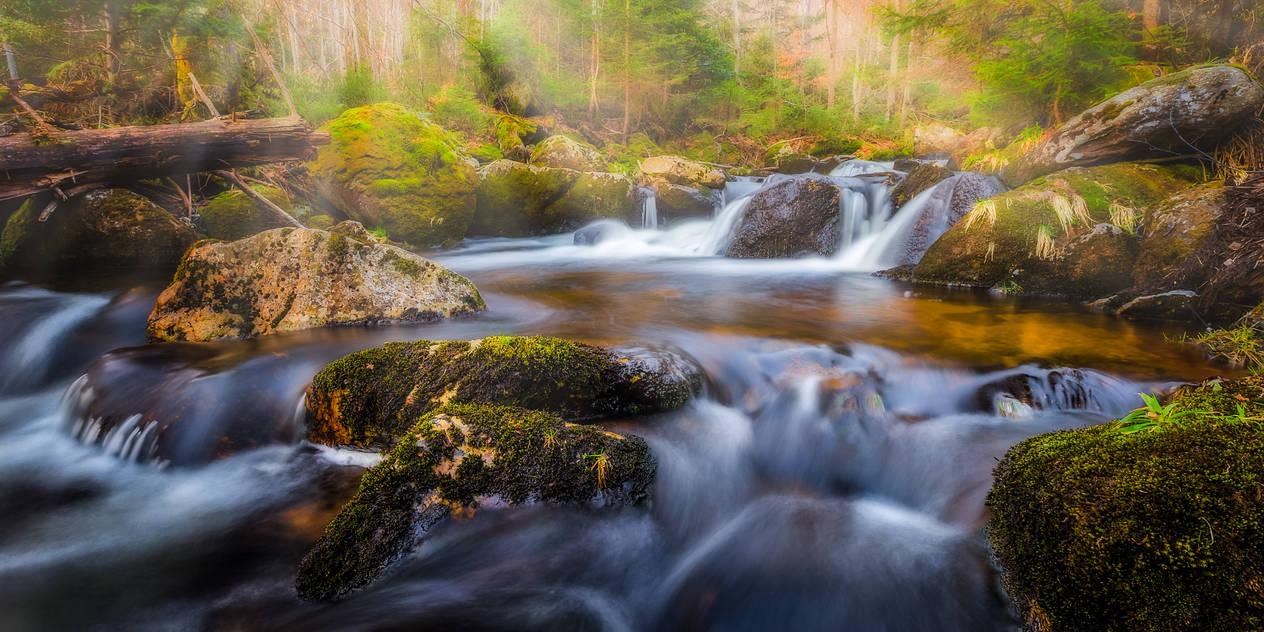 fairytale forest by StefanPrech