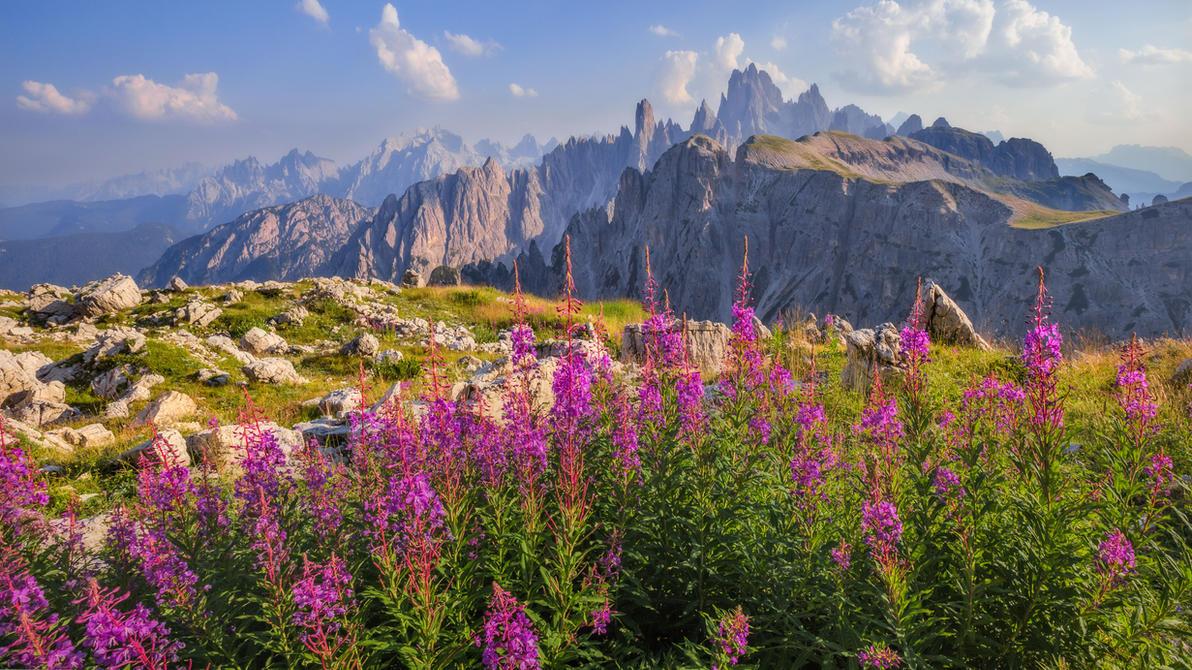 Dolomiti Italy Flowers autumn by StefanPrech