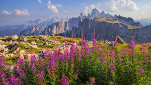 Dolomiti Italy Flowers autumn