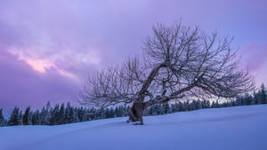 Vibrant tree on a snowy alpine morning