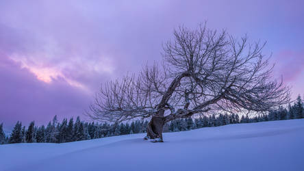 Vibrant tree on a snowy alpine morning