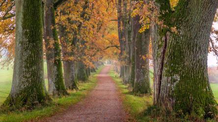 old oak allee by StefanPrech