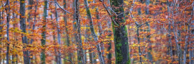 the last autumn impressions