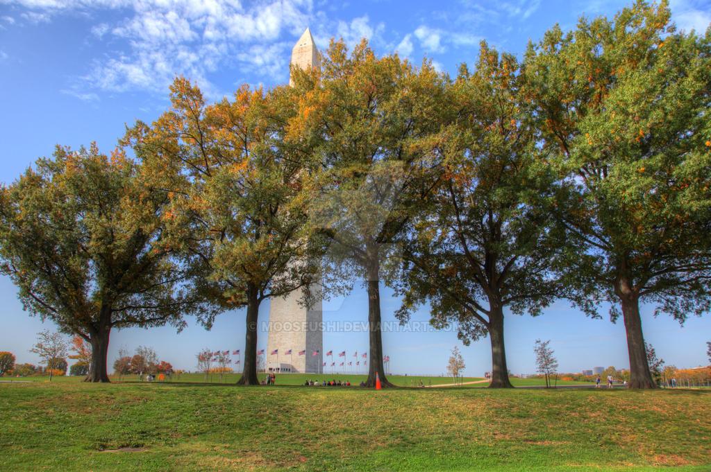 Five Trees by Mooseushi