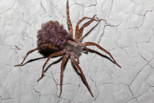Arachnid Daycare I