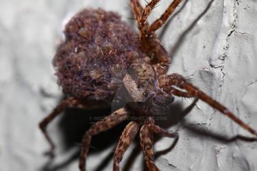 Arachnid Daycare II