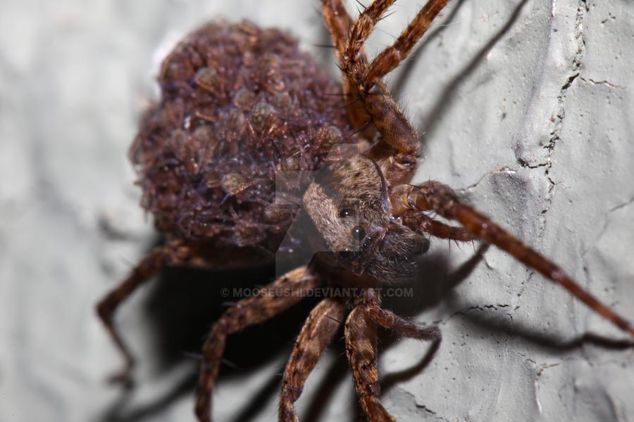 Arachnid Daycare II by Mooseushi