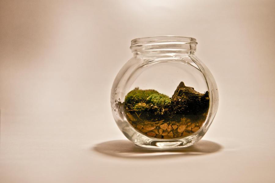 Mini Moss Terrarium by botaninko