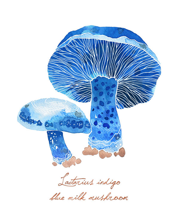 Blue Milk Mushroom by Endless-Ness