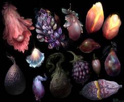 Cachobe Flora 9
