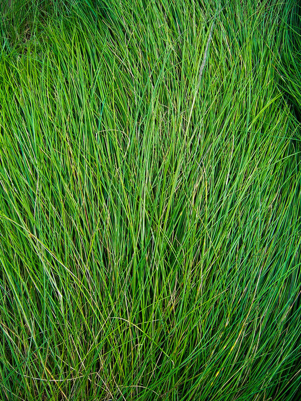 Long Grass Texture by Starna on DeviantArt