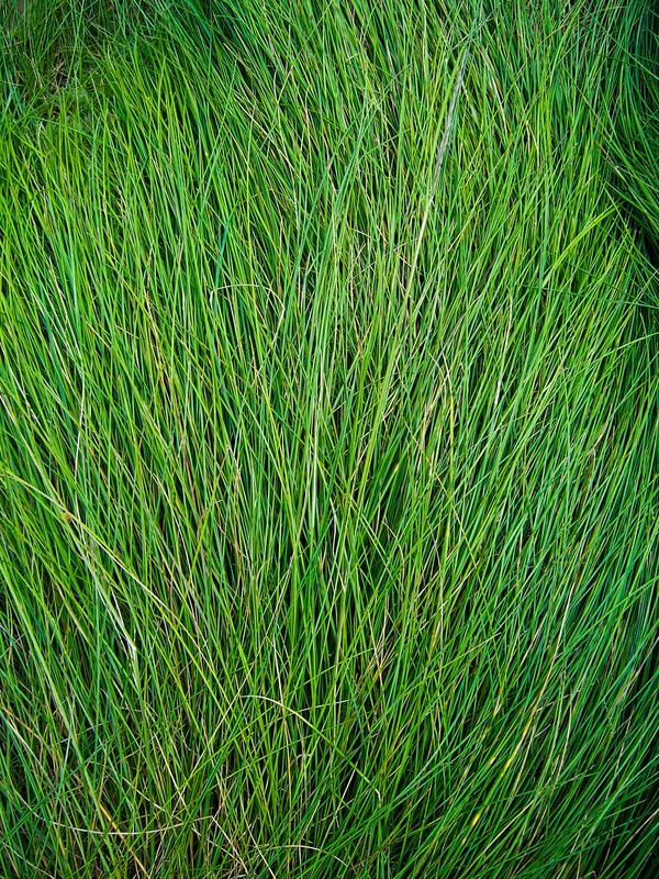 Long Grass - Texture