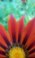 Frontyard Flowers 10