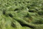 Grass Field 3