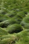 Grass Field 4
