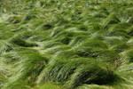 Grass Field 5