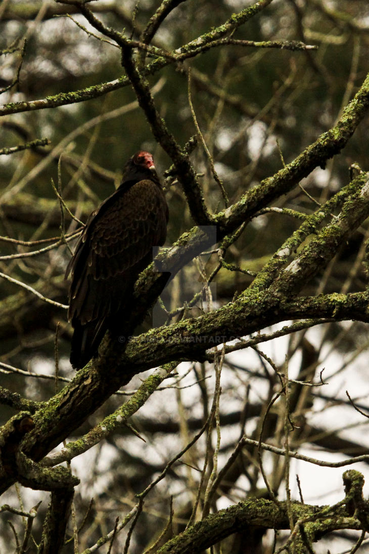 Vulture's Branch by Starna