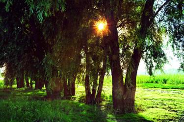SunnyTrees by CorePrideVU