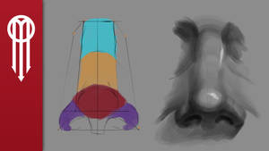 Study Series: How to draw a nose - Front plane. by adammiconi