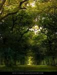 Forest- Stock Streamy