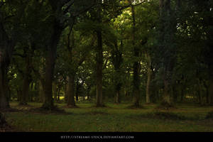 Forest- Stock Streamy by streamy-stock