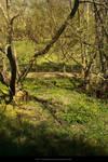 Forest- Streamy Stock