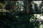 forest-streamy stock