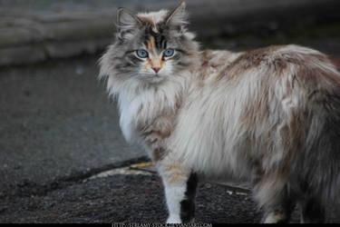 cat - streamy-stock by streamy-stock