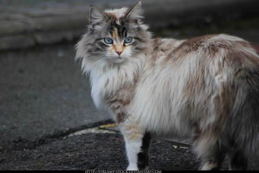 cat - streamy-stock