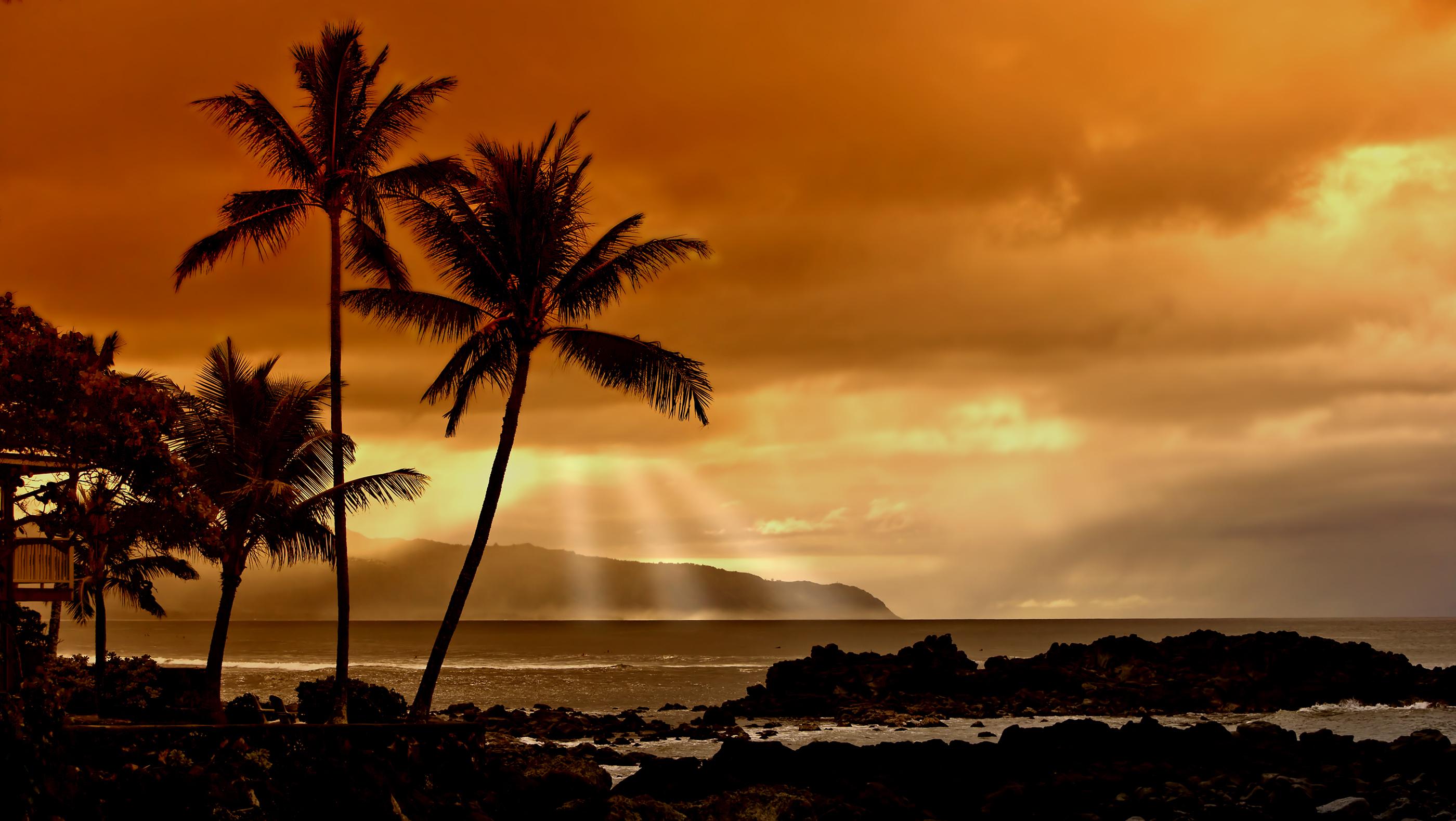 tropical sunset palm tree - photo #6