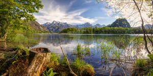 Early summer at the Almsee