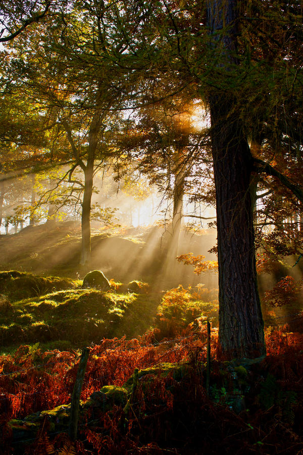 Woodland Steam by bongaloid