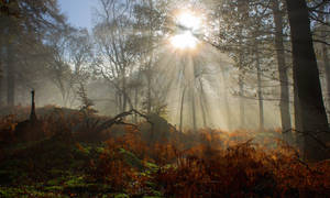 Treebeams by bongaloid