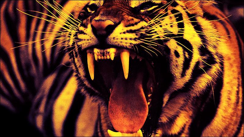 angry tiger eyes wallpaper - photo #6