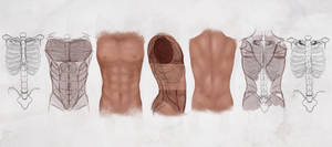 AS Drawing the Male Torso
