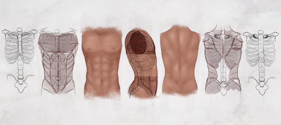 AS Drawing the Male Torso by ConceptCookie